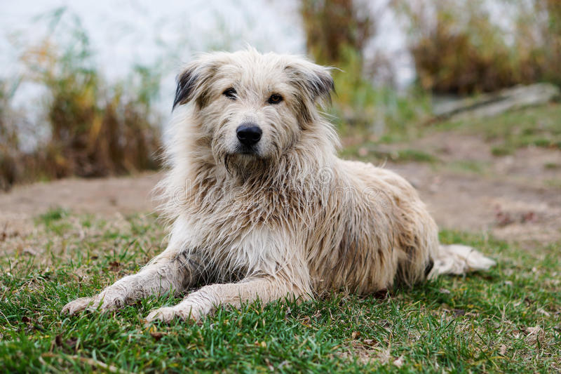 Download πορτρέτο αναδρομικό στοκ εικόνες. εικόνα από σκυλί, πορτρέτο - 62700776