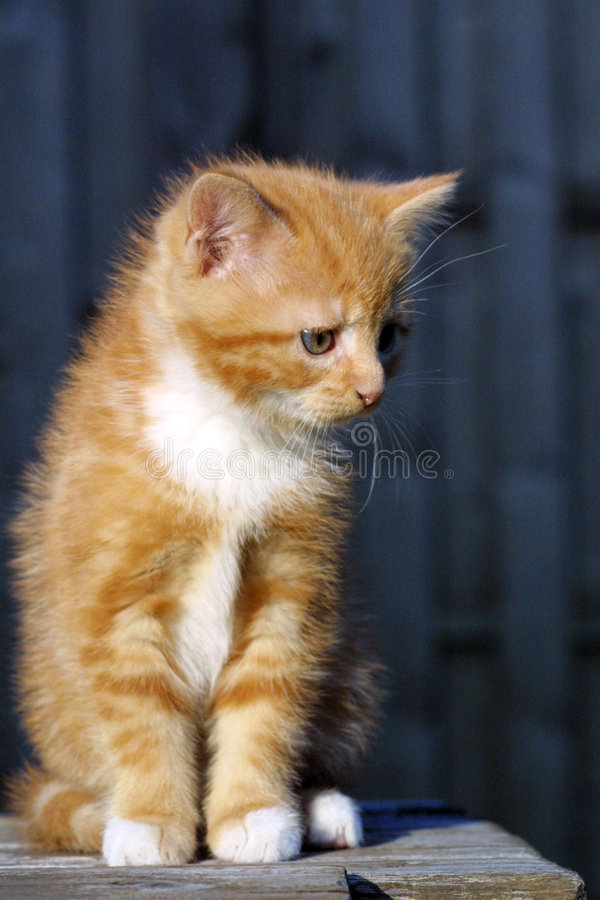πορτρέτο γατών