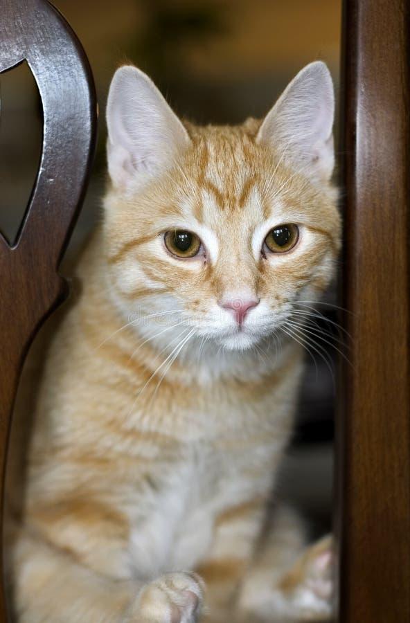 Download πορτρέτο γατών στοκ εικόνες. εικόνα από πρόσωπο, πιπερόριζα - 384384