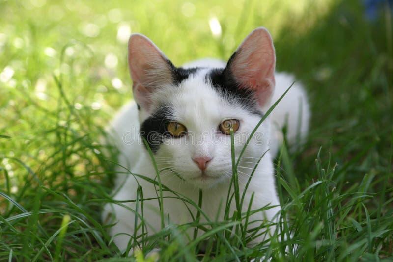 πορτρέτο γατών στοκ φωτογραφία