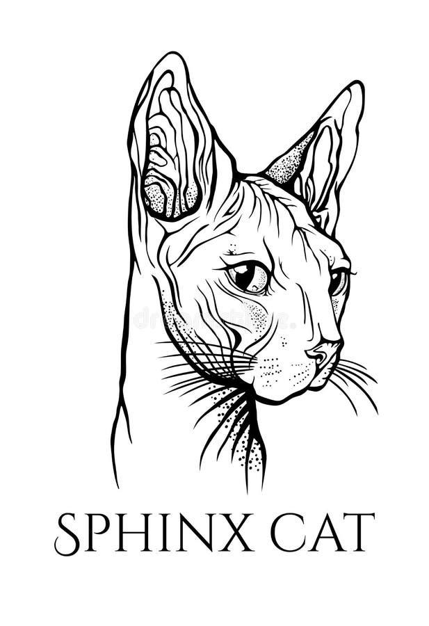 Πορτρέτο γατών r Γάτα Sphynx ελεύθερη απεικόνιση δικαιώματος