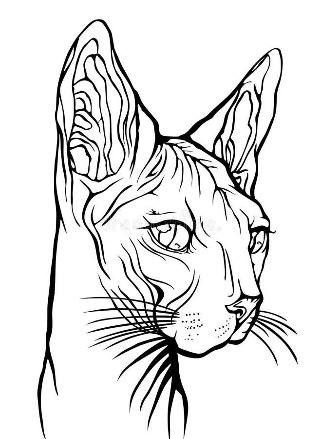 Πορτρέτο γατών r Γάτα Sphynx απεικόνιση αποθεμάτων