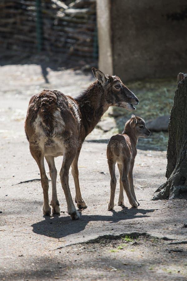 Πορτρέτο ενός δυτικών καυκάσιων tur, μιας μητέρας και ενός μωρού στοκ φωτογραφία με δικαίωμα ελεύθερης χρήσης