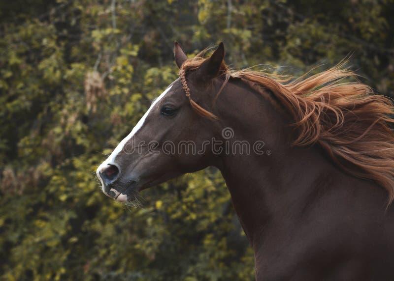 Πορτρέτο ενός κόκκινου αλόγου στο φθινόπωρο ελευθερίας στοκ φωτογραφίες με δικαίωμα ελεύθερης χρήσης