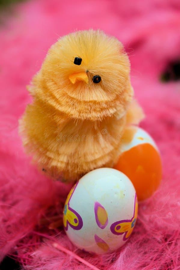 Πορτρέτο ενός νεοσσού με τα αυγά στοκ εικόνα με δικαίωμα ελεύθερης χρήσης