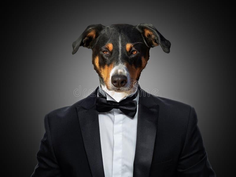 Πορτρέτο ενός σκυλιού βουνών Appenzeller σε ένα επιχειρησιακό κοστούμι στοκ φωτογραφία