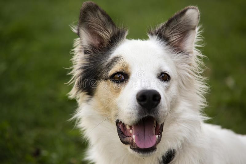 Πορτρέτο ενός σκυλιού στοκ εικόνες με δικαίωμα ελεύθερης χρήσης