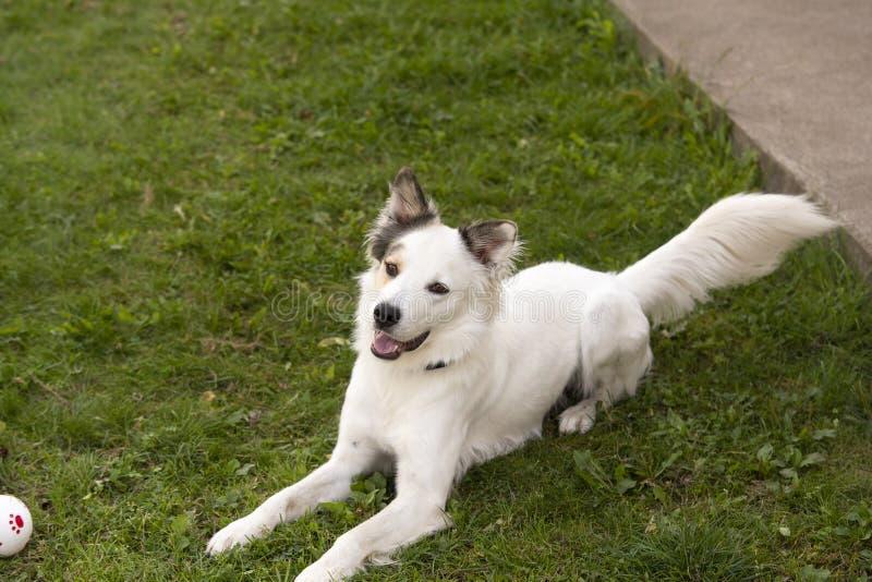 Πορτρέτο ενός σκυλιού στοκ φωτογραφίες με δικαίωμα ελεύθερης χρήσης