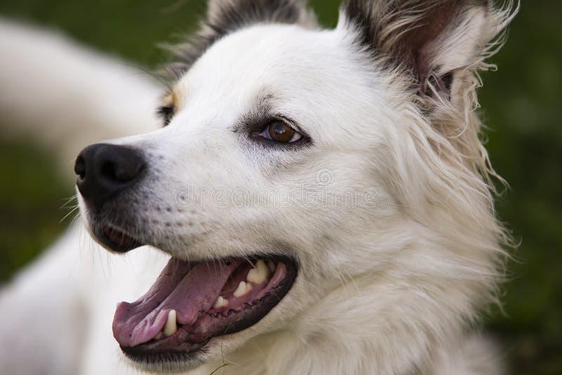 Πορτρέτο ενός σκυλιού στοκ φωτογραφία με δικαίωμα ελεύθερης χρήσης