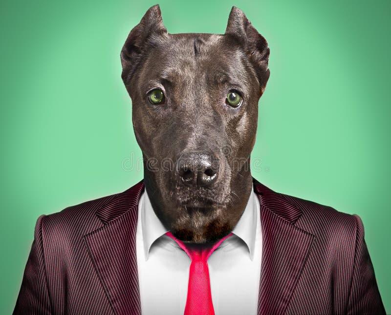 Πορτρέτο ενός σκυλιού σε ένα επιχειρησιακό κοστούμι στοκ φωτογραφίες