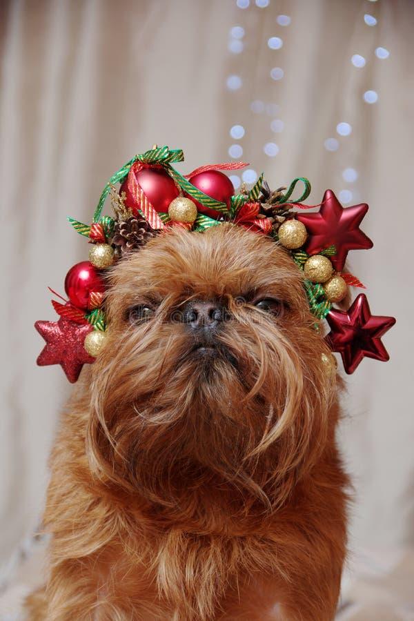Πορτρέτο ενός σκύλου με χριστουγεννιάτικη στολή στοκ φωτογραφίες με δικαίωμα ελεύθερης χρήσης
