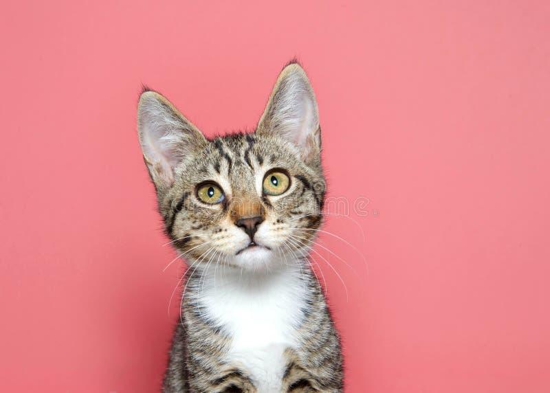 Πορτρέτο ενός τιγρέ γατακιού που ανατρέχει στοκ εικόνες