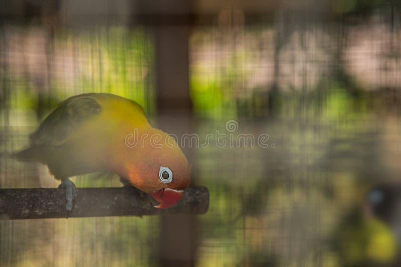 Πορτρέτο ενός όμορφου παπαγάλου στοκ εικόνες