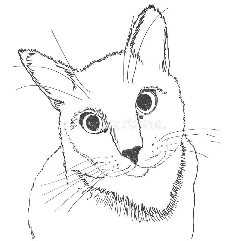 Πορτρέτο μιας γάτας με ένα μαύρο κτύπημα σε ένα άσπρο υπόβαθρο στοκ φωτογραφία με δικαίωμα ελεύθερης χρήσης