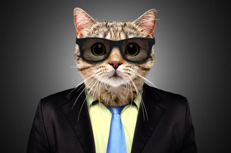 Πορτρέτο μιας γάτας σε ένα επιχειρησιακό κοστούμι στοκ φωτογραφία