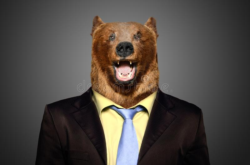 Πορτρέτο μιας καφετιάς αρκούδας σε ένα επιχειρησιακό κοστούμι στοκ φωτογραφίες