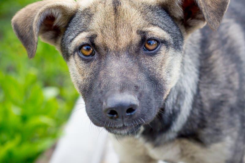 Πορτρέτο μιας νέας κινηματογράφησης σε πρώτο πλάνο σκυλιών Το σκυλί κοιτάζει forward_ στοκ φωτογραφίες
