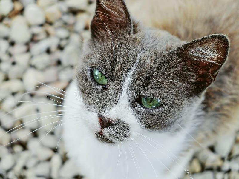 Πορτρέτο μιας περιπλανώμενης γάτας που ζητά τα τρόφιμα και την προσοχή στοκ φωτογραφία με δικαίωμα ελεύθερης χρήσης