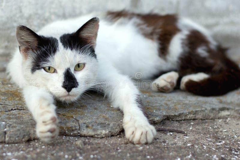 Πορτρέτο μιας λυπημένης άστεγης γάτας που βρίσκεται στο πεζοδρόμιο στο stre στοκ φωτογραφίες