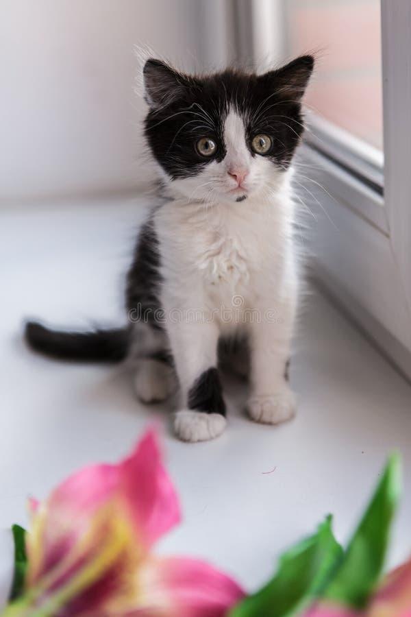 Πορτρέτο μιας όμορφης γάτας γατακιών στοκ εικόνες