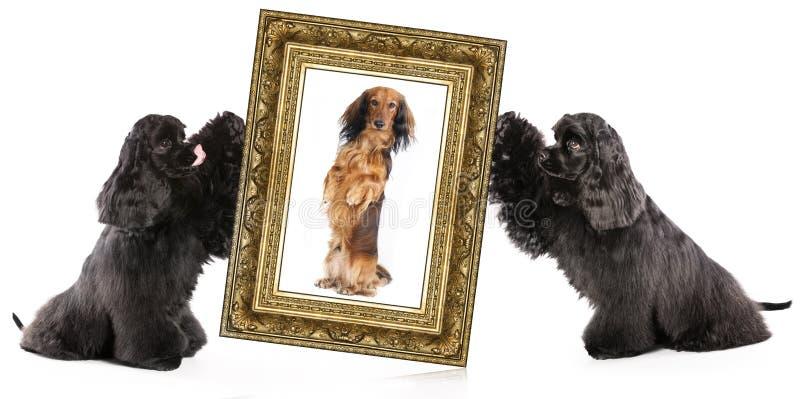 Πορτρέτο σκυλιών στοκ εικόνες με δικαίωμα ελεύθερης χρήσης