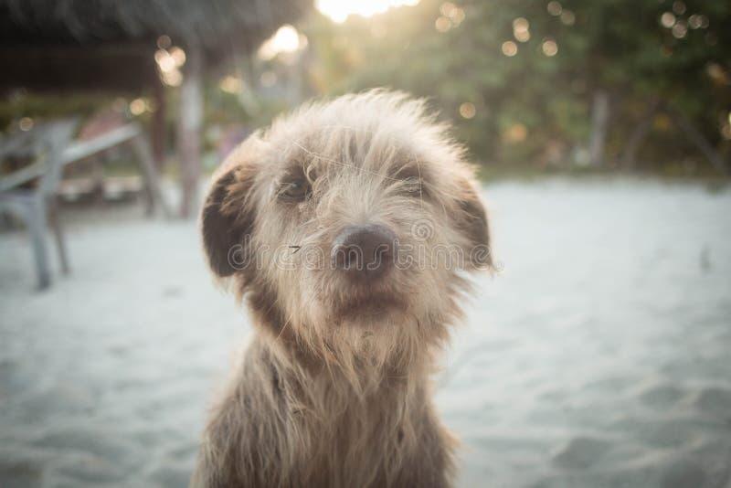 Πορτρέτο σκυλιών κυματωγών στοκ φωτογραφίες