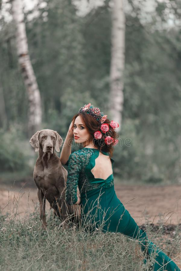 Πορτρέτο της κυρίας του βουνού χαλκού και weimaraner του δάσους στοκ εικόνες