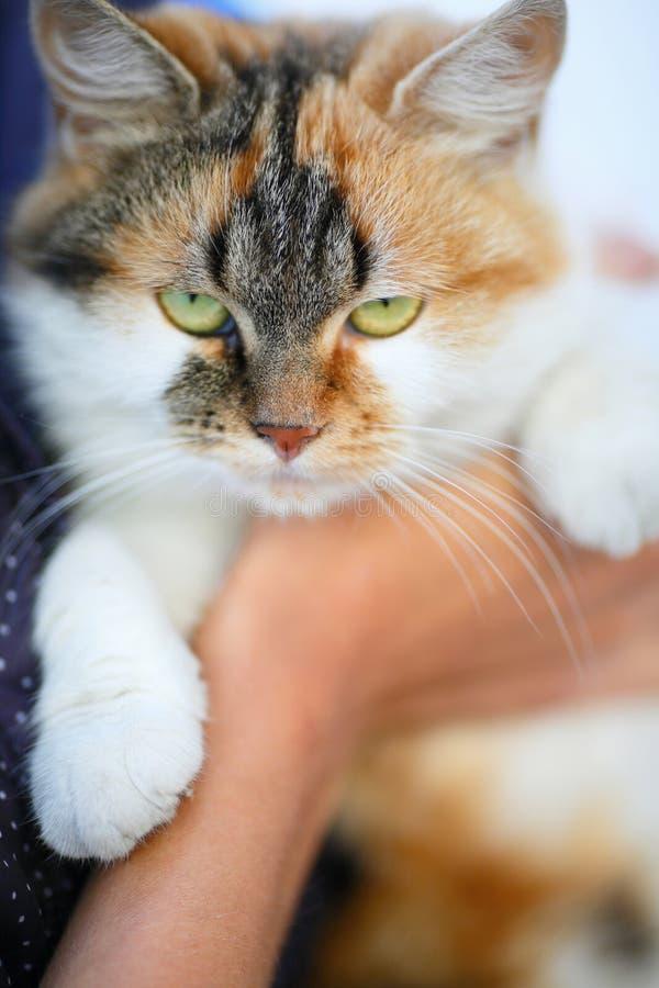 Πορτρέτο της κόκκινης γάτας στοκ εικόνα