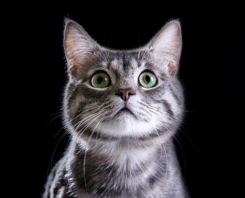 Πορτρέτο της χαριτωμένης αστείας γάτας στοκ εικόνες