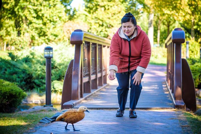 Πορτρέτο της όμορφης ηλικίας γυναίκας στο πάρκο Πληρώστε με το πουλί Πάπια τροφών στοκ φωτογραφίες
