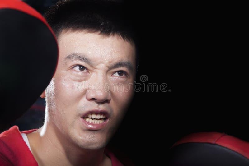 Πορτρέτο του επιθετικού εγκιβωτίζοντας λεωφορείου κοιτάγματος στα μαξιλάρια εκμετάλλευσης γυμναστικής στοκ εικόνες