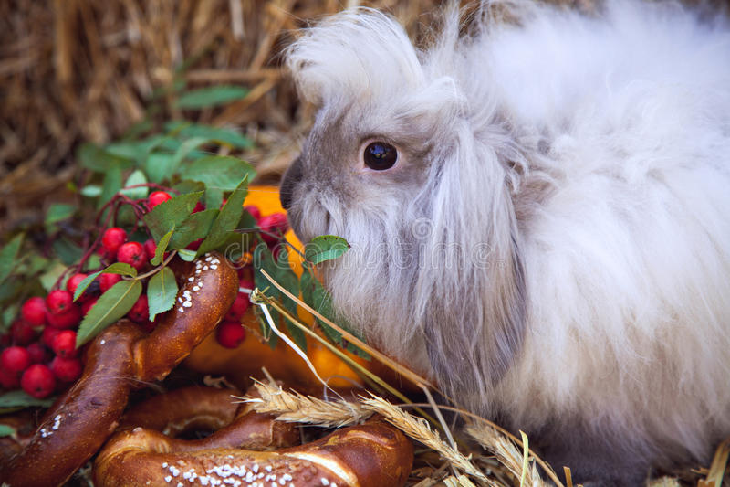 Πορτρέτο του κουνελιού με τα τρόφιμα πτώσης στοκ εικόνες