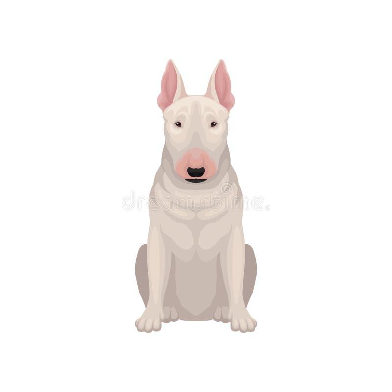 Πορτρέτο του τεριέ ταύρων συνεδρίασης Σκυλί με το αυγό-διαμορφωμένο επικεφαλής και κοντό άσπρο παλτό Ανθρώπινος καλύτερος φίλος ` απεικόνιση αποθεμάτων