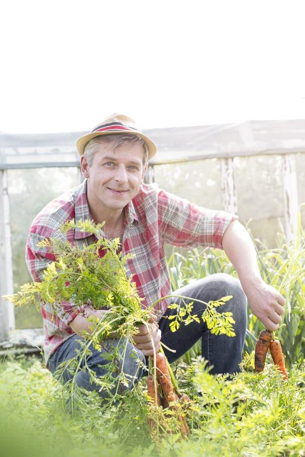 Πορτρέτο του χαμογελώντας αγρότη που συγκομίζει τα φρέσκα καρότα στο αγρόκτημα στοκ εικόνες με δικαίωμα ελεύθερης χρήσης