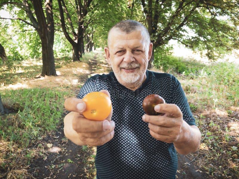 Πορτρέτο του χαμογελώντας ανώτερου ατόμου που παίρνει το διαφορετικό είδος δύο της ντομάτας στοκ φωτογραφία με δικαίωμα ελεύθερης χρήσης