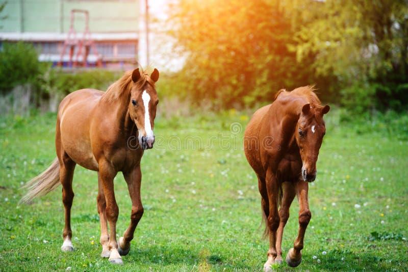 Πορτρέτο του όμορφου κόκκινου αλόγου το καλοκαίρι στοκ φωτογραφίες