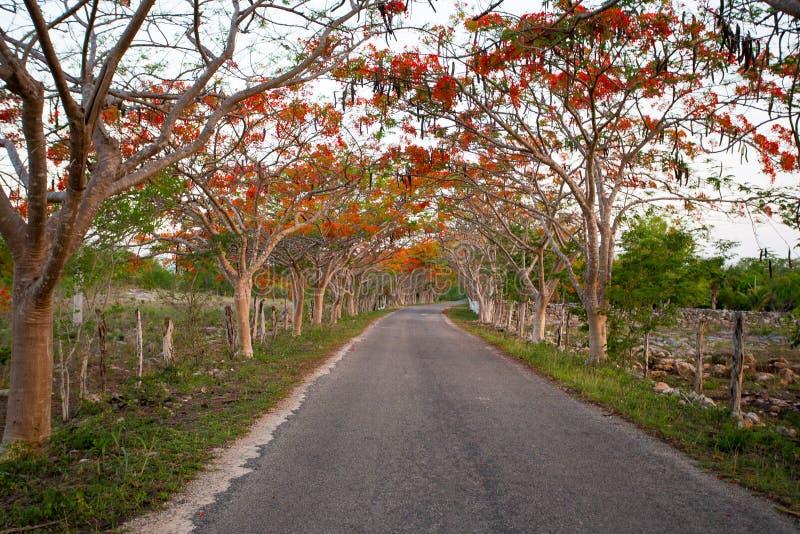 Πορτρέτο του όμορφου τοπίου των δέντρων κατά μήκος του οδικού κοκκίνου στοκ φωτογραφία