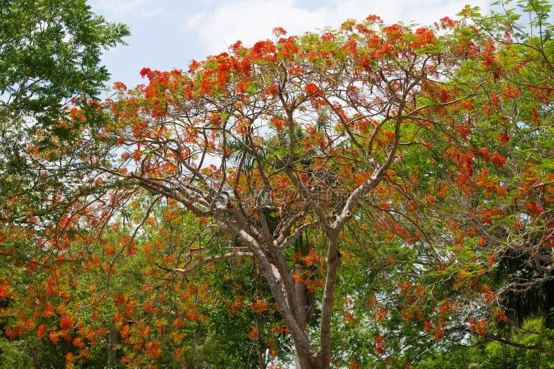 Πορτρέτο του όμορφου τοπίου των δέντρων κατά μήκος του οδικού κοκκίνου στοκ εικόνες