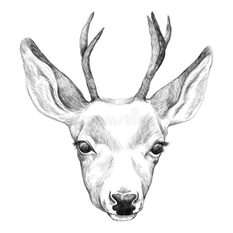Πορτρέτο των ελαφιών συρμένος εικονογράφος απεικόνισης χεριών ξυλάνθρακα βουρτσών ο σχέδιο όπως το βλέμμα κάνει την κρητιδογραφία στοκ φωτογραφία με δικαίωμα ελεύθερης χρήσης