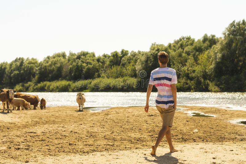 Πορτρέτο των νέων όμορφων γενειοφόρων αρσενικών sheeping αγελάδων αγροτών στο θερινό τομέα s στοκ εικόνες