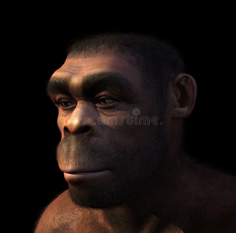 Πορτρέτο Erectus Homo απεικόνιση αποθεμάτων