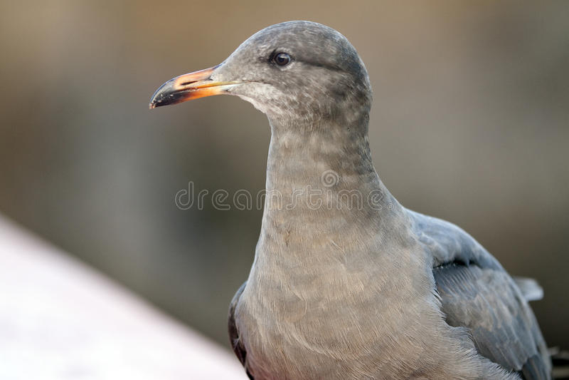πορτρέτο s πουλιών στοκ εικόνες