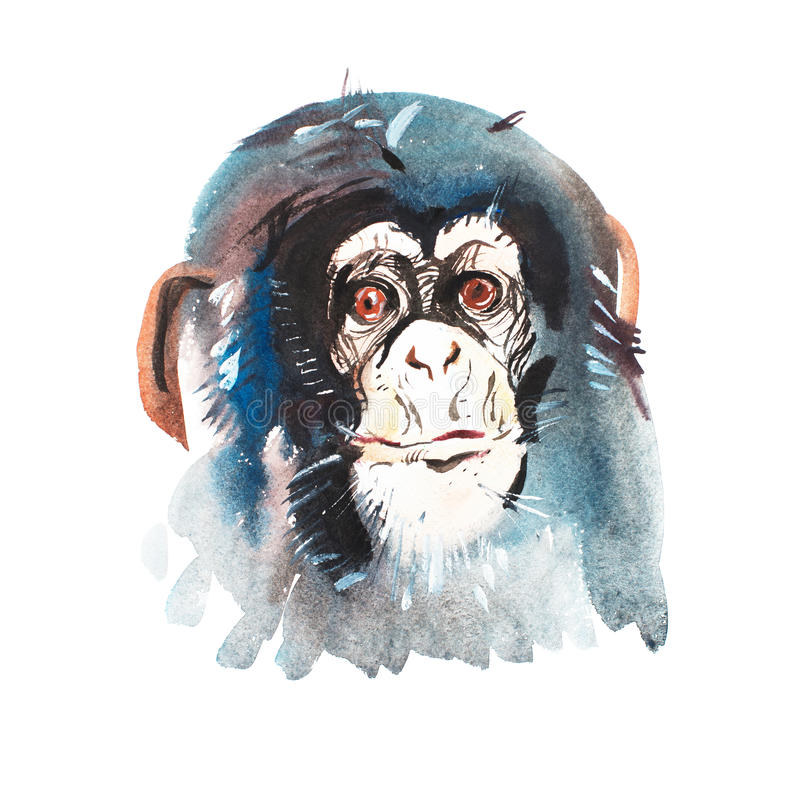 Πορτρέτο Watercolor του γκρίζου γούνινου πιθήκου Ακουαρέλα που σύρει το σύμβολο του 2016 στοκ εικόνες με δικαίωμα ελεύθερης χρήσης