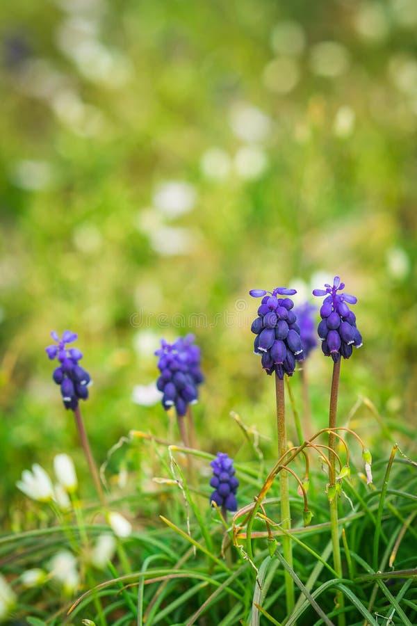 Πορφυρά λουλούδια στη χλόη στοκ εικόνες