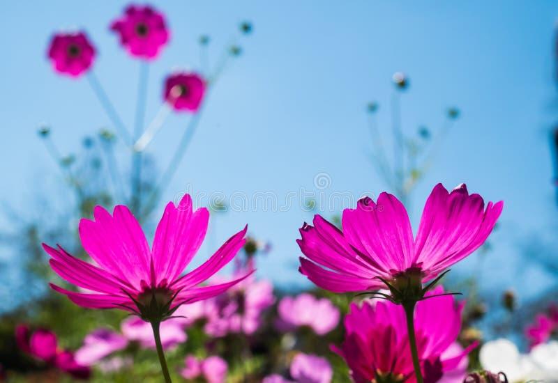 Πορφυρά λουλούδια στο μπλε ουρανό στοκ φωτογραφία με δικαίωμα ελεύθερης χρήσης