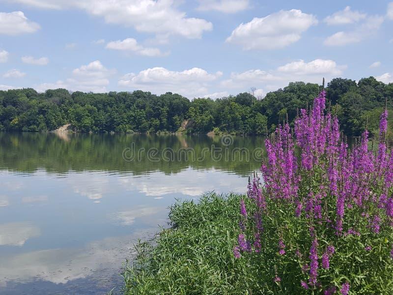 Πορφυρά λουλούδια αλλά η λίμνη στοκ εικόνες με δικαίωμα ελεύθερης χρήσης