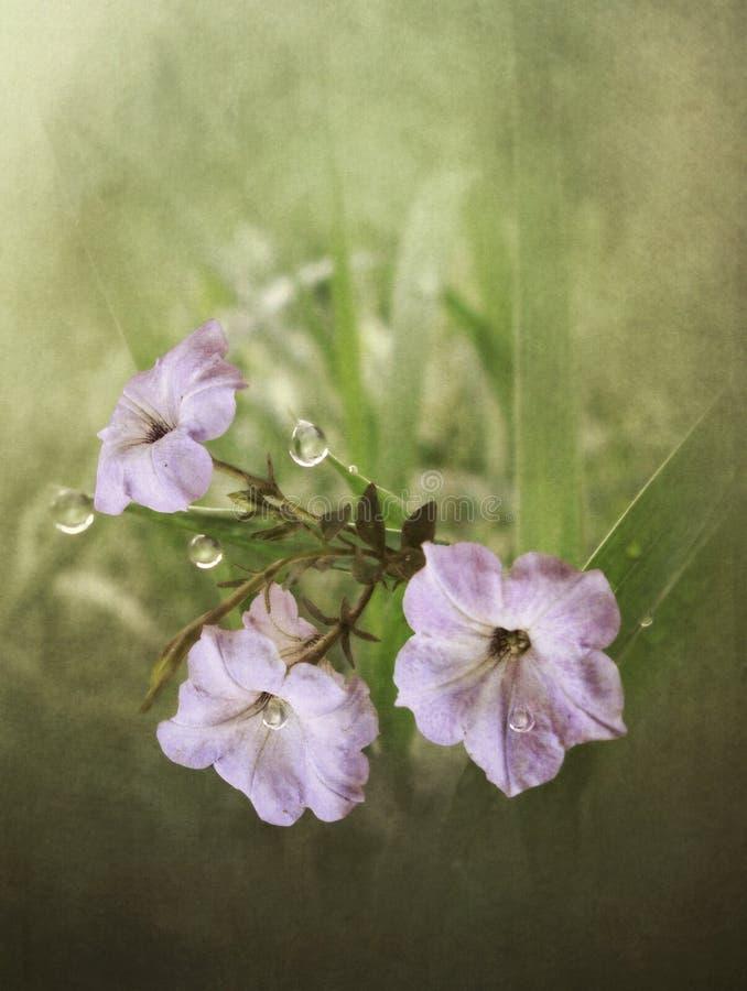 Πορφυρά λουλούδια με τη δροσιά απεικόνιση αποθεμάτων