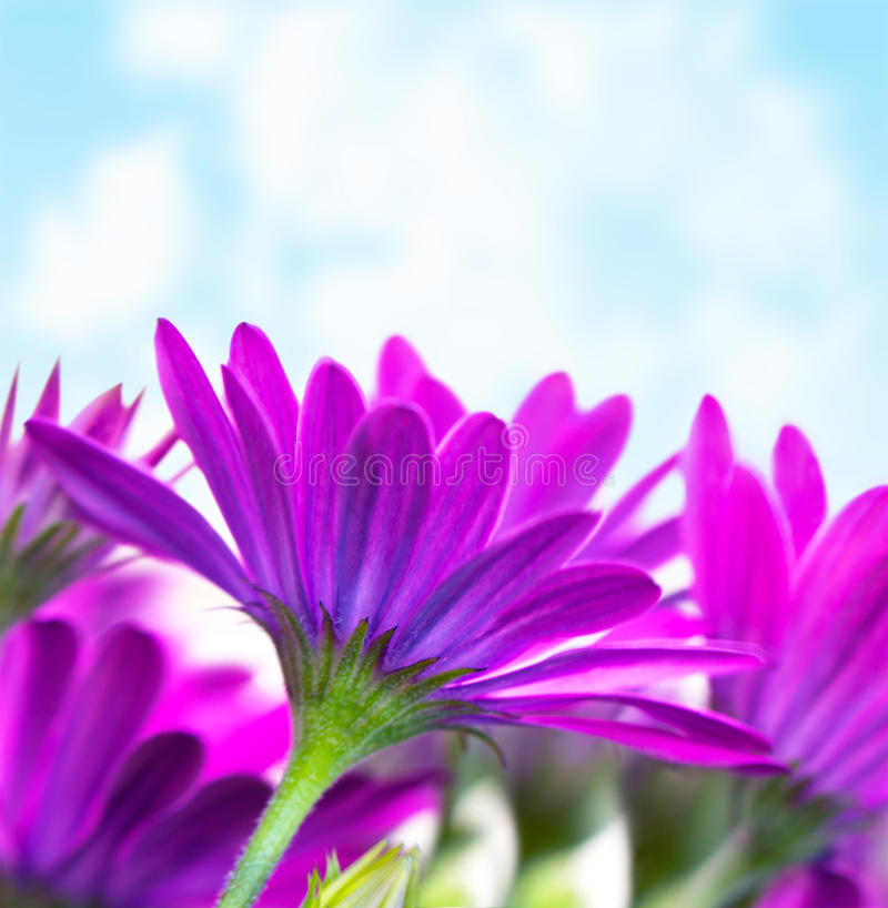 Πορφυρά λουλούδια πέρα από το μπλε ουρανό στοκ φωτογραφίες με δικαίωμα ελεύθερης χρήσης