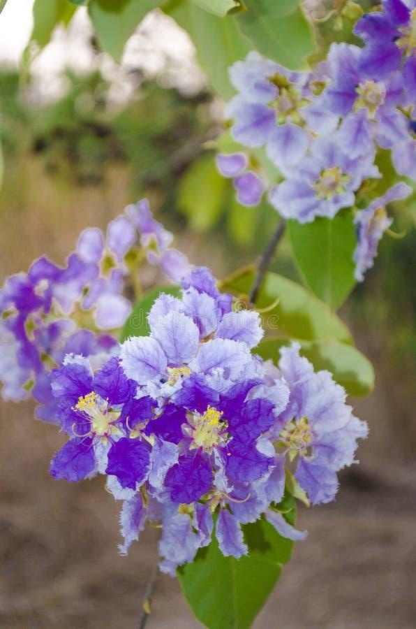 Πορφυρά λουλούδια στοκ εικόνες