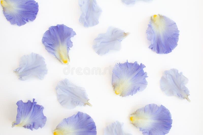 Πορφυρά πέταλα της Iris Deconstructed στοκ φωτογραφίες
